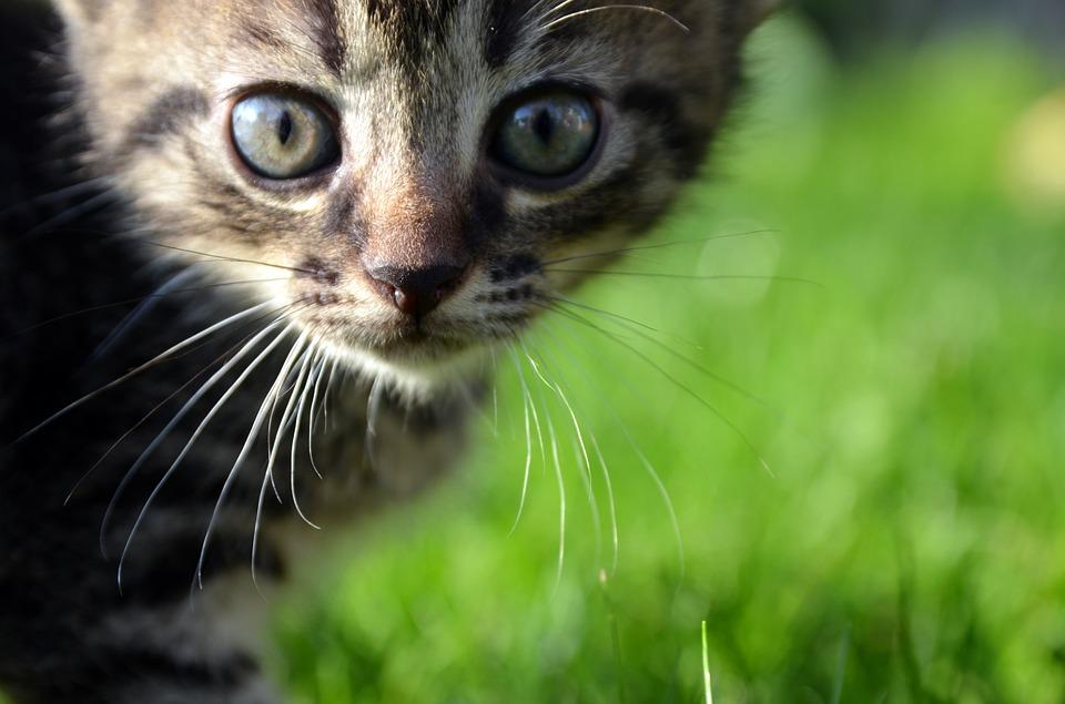子ネコの画像