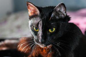 ネコの画像