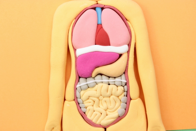 内臓の画像