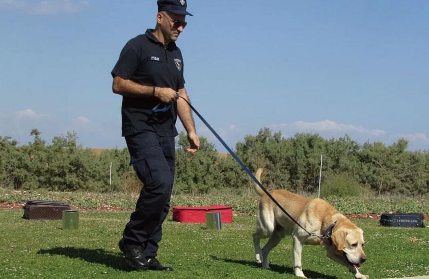 犬の訓練の画像