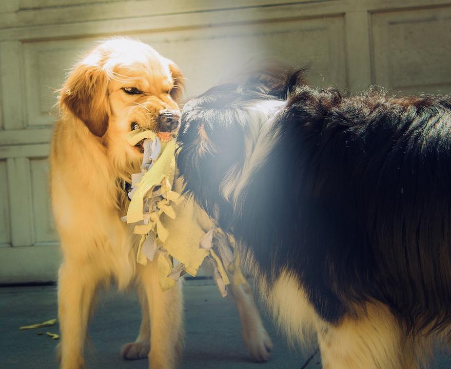 狂犬病の画像