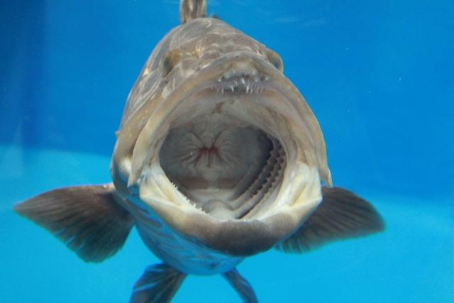 魚の口の画像