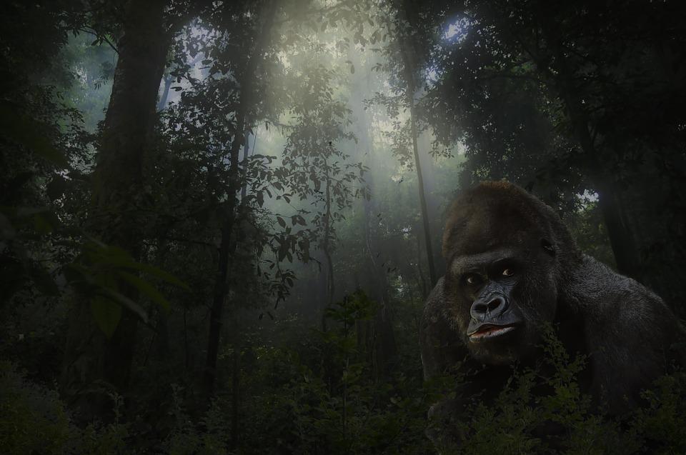 猿人の画像
