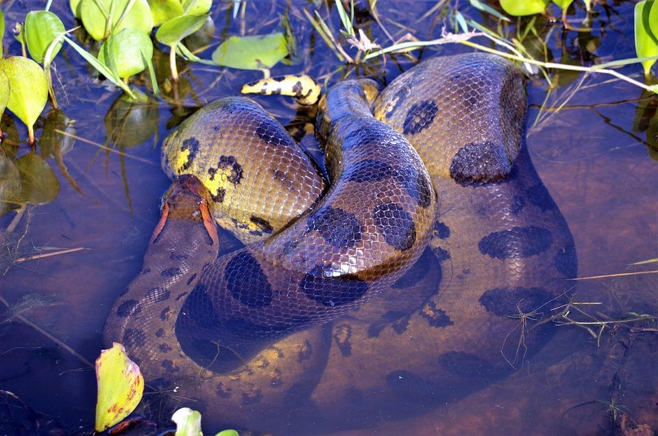 大蛇の画像