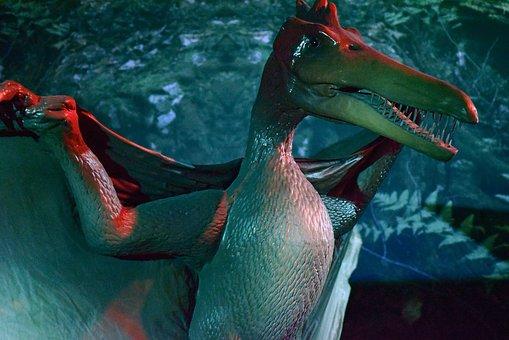 翼竜の画像